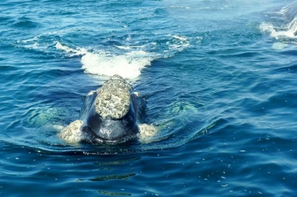 Como é uma baleia indo em sua direção