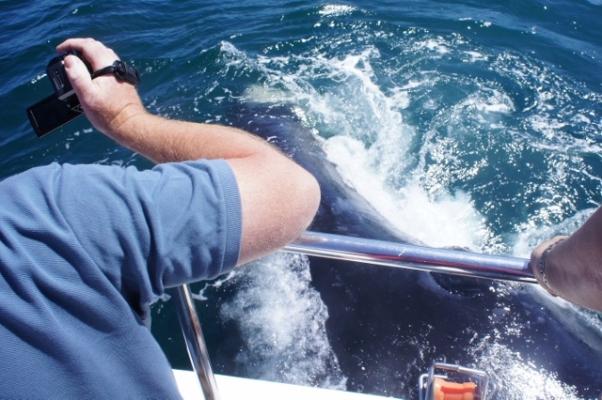Como é uma baleia batendo no seu barco POF